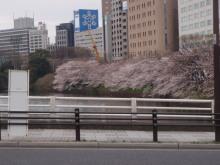 $hamukenのブログ-市谷の桜