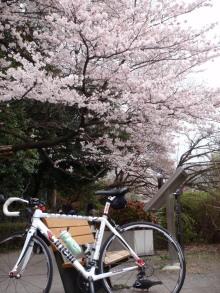 hamukenのブログ-善福寺の桜2